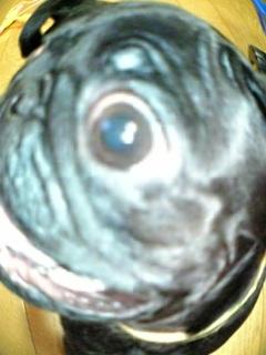 魚眼レンズ